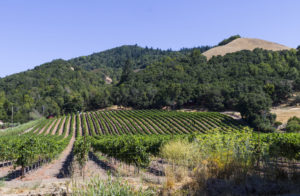 Vineyard outside Santa Rosa, California